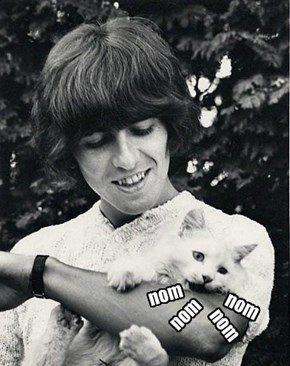 Kitty Caught a Beatle