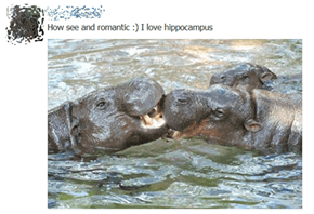 Remember the Romantic Hippocampus!