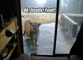 Ah, finally! Food!