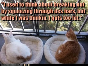 """""""I used to think about breaking out by squeezing through des bars, but while I was thinkin, I gots too fat."""""""