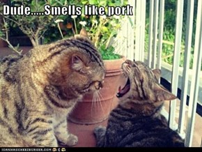Dude.....Smells like pork