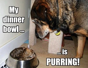 My dinner bowl ...