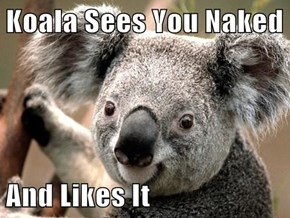 Koala Sees You Naked  And Likes It