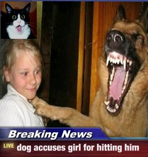 Breaking News - dog accuses girl for hitting him
