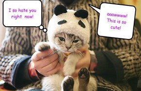 Panda hat+kitten=anger