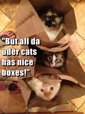 """But all da                                                         uder cats                                                            has nice                                                               boxes!"""