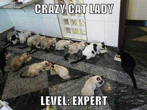 CRAZY CAT LADY  LEVEL: EXPERT