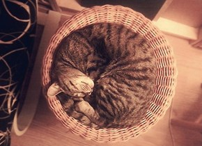 Tucker's basket...