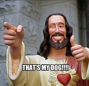 THAT'S MY DOG!!!!