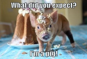What did you expect?  I'm a pig!