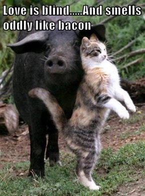 Love is blind.....And smells oddly like bacon