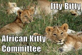Itty Bitty  African Kitty Committee