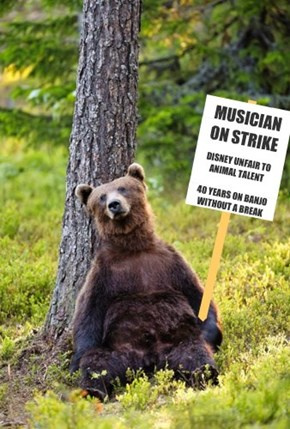Country Bear Absentee
