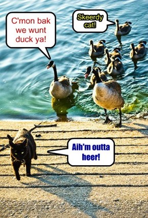 C'mon bak we wunt duck ya!