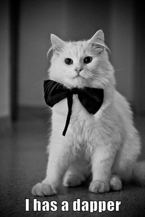 I has a dapper