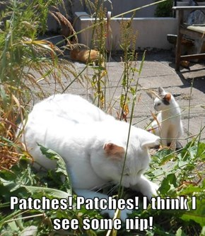 Patches! Patches! I think I see some nip!
