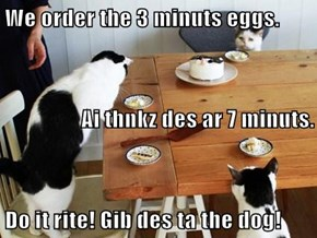 We order the 3 minuts eggs.  Ai thnkz des ar 7 minuts.  Do it rite! Gib des ta the dog!
