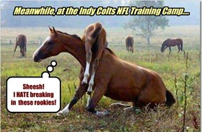 Meanwhile, at the Indy Colts NFL Training Camp....
