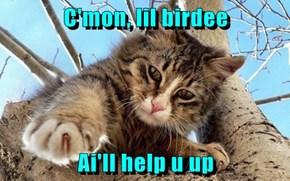C'mon, lil birdee  Ai'll help u up