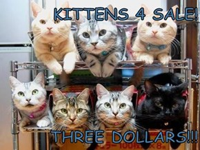 KITTENS 4 SALE!  THREE DOLLARS!!!