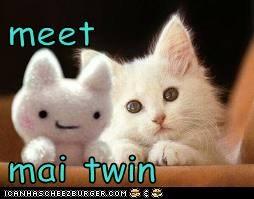 meet  mai twin