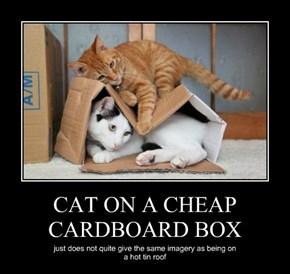 CAT ON A CHEAP CARDBOARD BOX