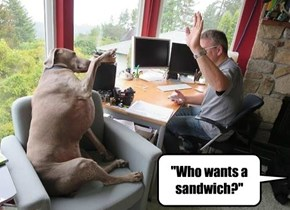 """Who wants a sandwich?"""