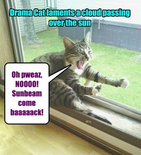 Cats are so dramatic!