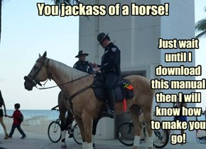 You jackass of a horse!