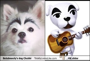 Bubzbeauty's dog Chubbi Totally Looks Like KK slider
