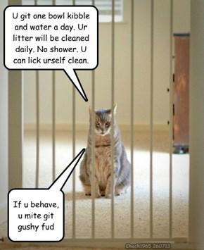 Hooman, U iz sentenced 2 life wif a kitteh