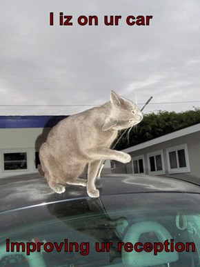 I iz on ur car  improving ur reception