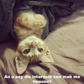 Internets kitteh