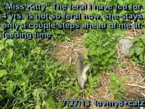 """Miss Kitty"" The feral I have fed for 4 yrs. is not so feral now, she stays only a couple steps ahead of me at feeding time.     7/27/13  luvmy8+catz"
