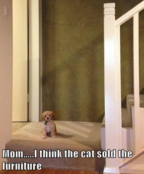 Mom.....I think the cat sold the furniture