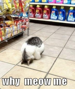 why  meow me