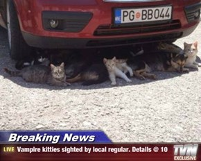 Breaking News - Vampire kitties sighted by local regular. Details @ 10