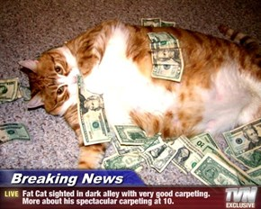 Breaking News - Fat Cat sighted in dark alley with very good carpeting. More about his spectacular carpeting at 10.