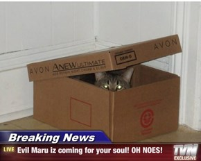 Breaking News - Evil Maru iz coming for your soul! OH NOES!