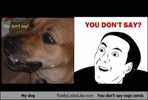 My dog Totally Looks Like You don't say rage comic