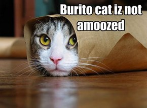 Burito cat