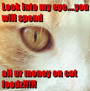Look into my eye....you will spend  all ur money on cat foodz!!!!!