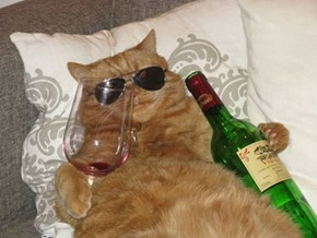 The Cool Cats Drink Wine