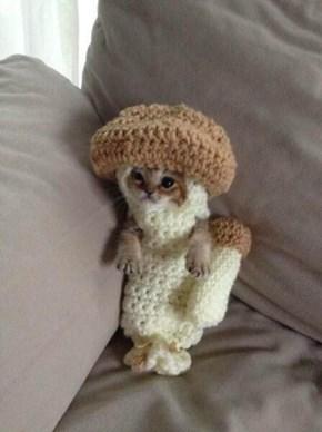 Little mushroom kitteh!