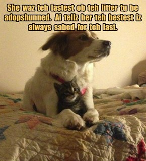 She  waz  teh  lastest  ob  teh  litter  tu  be  adopshunned.   Ai  tellz  her  teh  bestest  iz  always  sabed  for  teh  last.