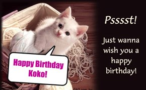 Happy Birthday Koko!
