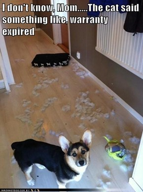 I don't know, Mom.....The cat said something like, warranty expired