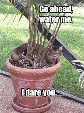 Water regularly. Keep in a sunny location.