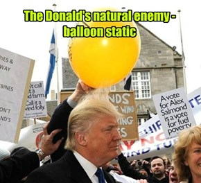 The Donald's natural enemy - balloon static