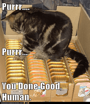 Purrr.... Purrr... You Done Good, Human.